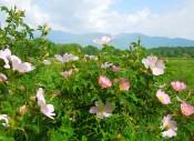 El Valle de Las Rosas